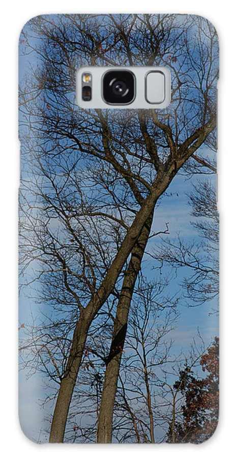 Woodland Galaxy S8 Case featuring the photograph Framed In Oak - 2 by Linda Shafer
