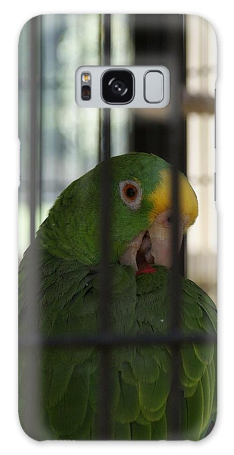 Parrot Galaxy Case featuring the photograph Framed by Shelley Jones