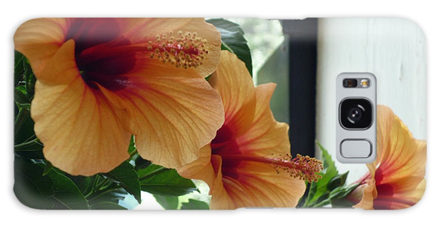 Photography Flower Floral Bloom Hibiscus Peach Galaxy Case featuring the photograph Friends For A Day by Karin Dawn Kelshall- Best