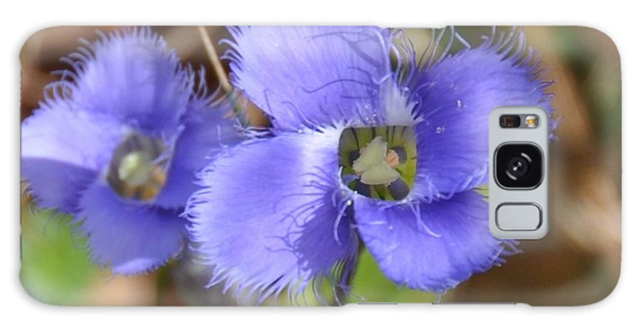 Flower Galaxy S8 Case featuring the photograph Fringed Gentian 1 by Rich Bodane