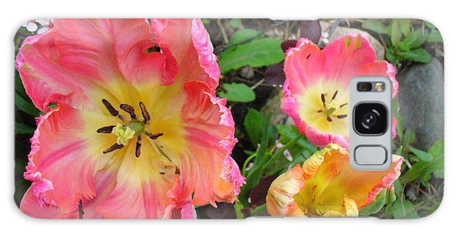 Tulips Galaxy S8 Case featuring the photograph Fringed Tulips by Peggy King
