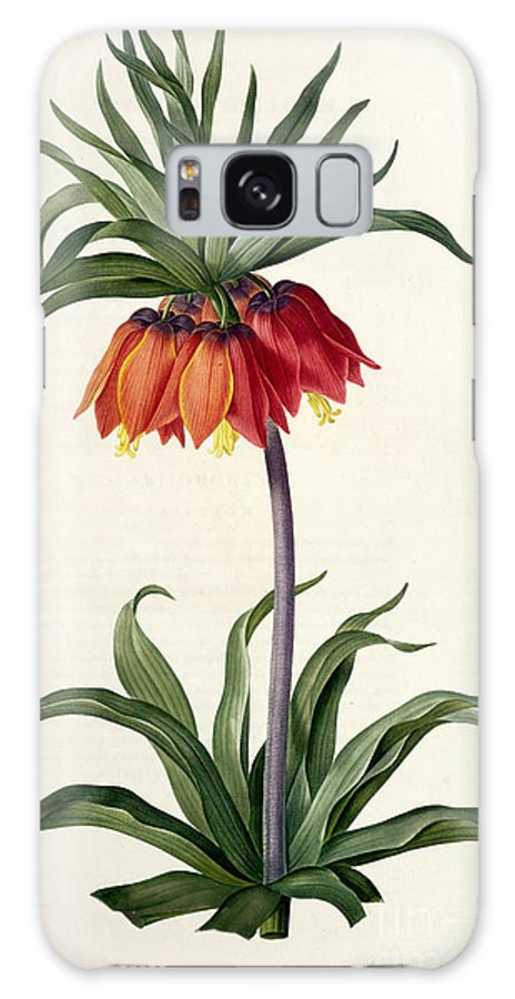 Fritillaria Galaxy S8 Case featuring the drawing Fritillaria Imperialis by Pierre Joseph Redoute