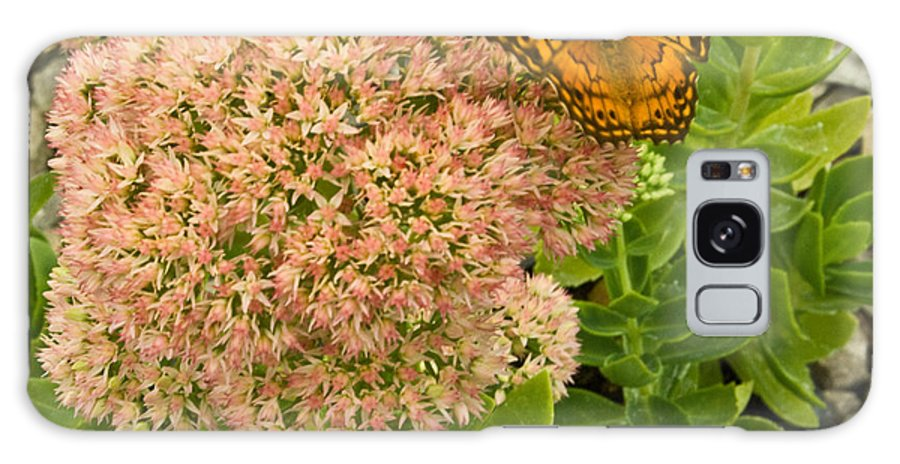 Fritillary Galaxy S8 Case featuring the photograph Fritillary On Flower by Douglas Barnett