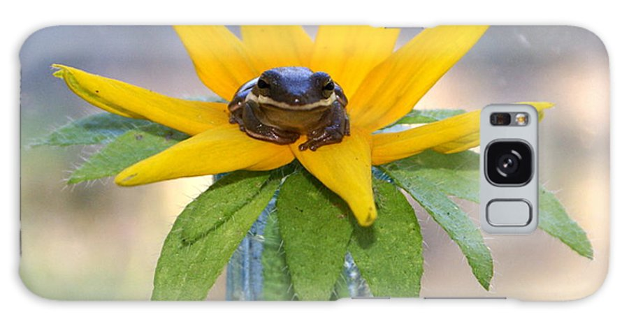 Flower Galaxy Case featuring the photograph Frog A Lilly by Debbie May