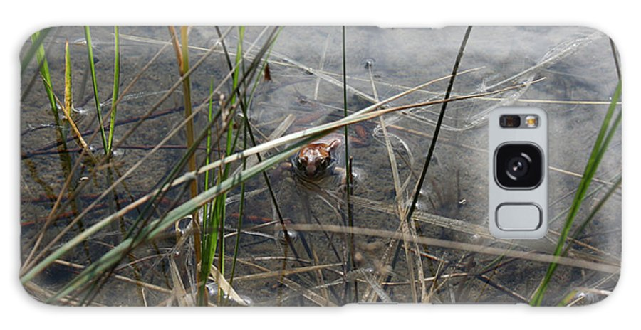 Frog Water Mother Nature Wild Reptile Eyes Lake Marsh Galaxy S8 Case featuring the photograph Frog Home by Andrea Lawrence