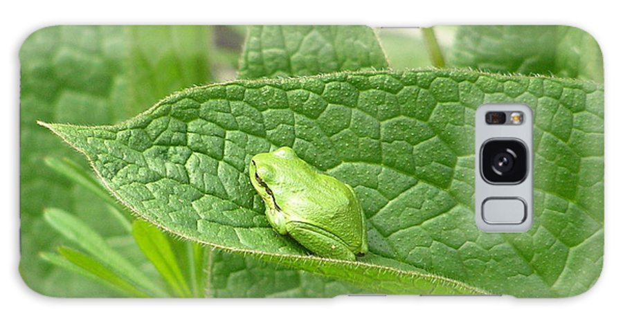 Frog Galaxy S8 Case featuring the photograph Frog In Comfrey by Suzanne Shepherd