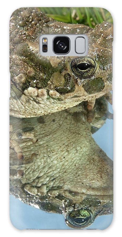 Gardener Galaxy S8 Case featuring the photograph Frog Reflection by Cliff Norton