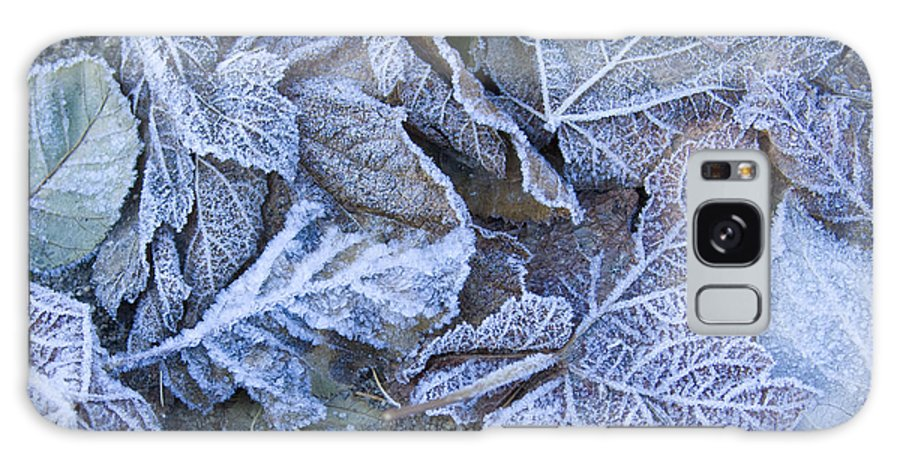 Frost Galaxy Case featuring the photograph Frost by Idaho Scenic Images Linda Lantzy