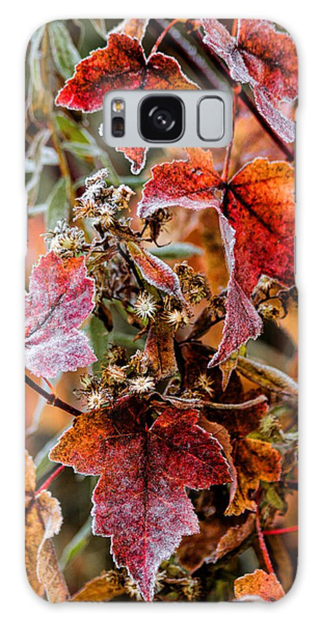 Fall Galaxy S8 Case featuring the photograph Frosted Fall by Stephen Anthony