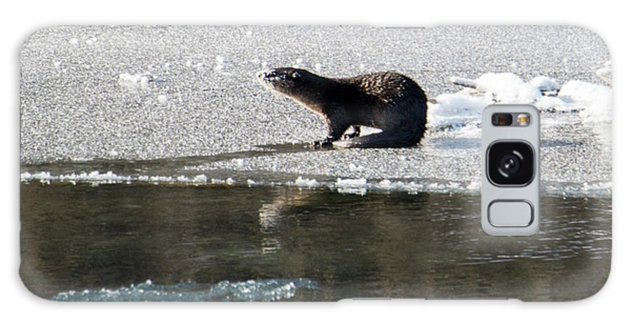 River Otter Galaxy S8 Case featuring the photograph Frosty River Otter by Mike Dawson
