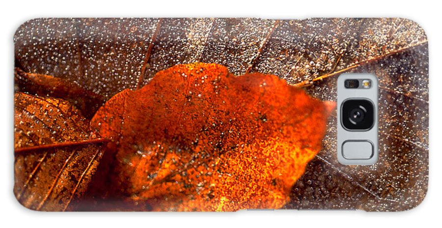 Leaf Galaxy S8 Case featuring the photograph Frozen Leaf by Michael Mogensen