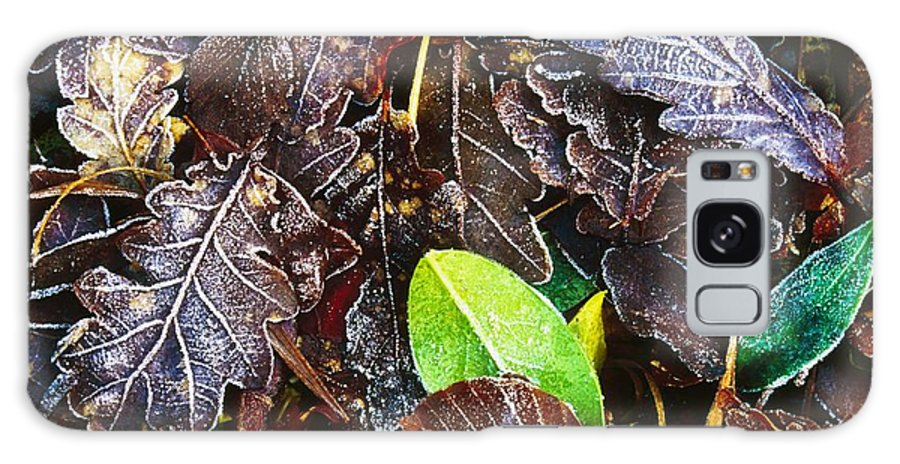 Cold Galaxy S8 Case featuring the photograph Frozen Oak Leaves, Glenveagh National by Gareth McCormack
