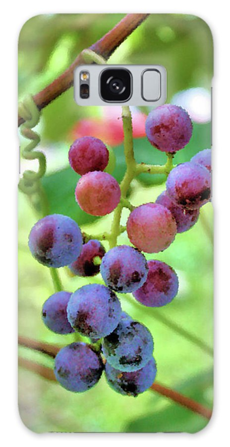 Grapes Galaxy S8 Case featuring the photograph Fruit Of The Vine by Kristin Elmquist