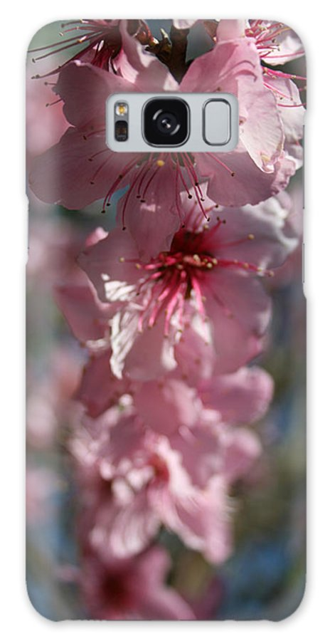 Close Up Galaxy S8 Case featuring the photograph Full Bloom by Joshua Sunday