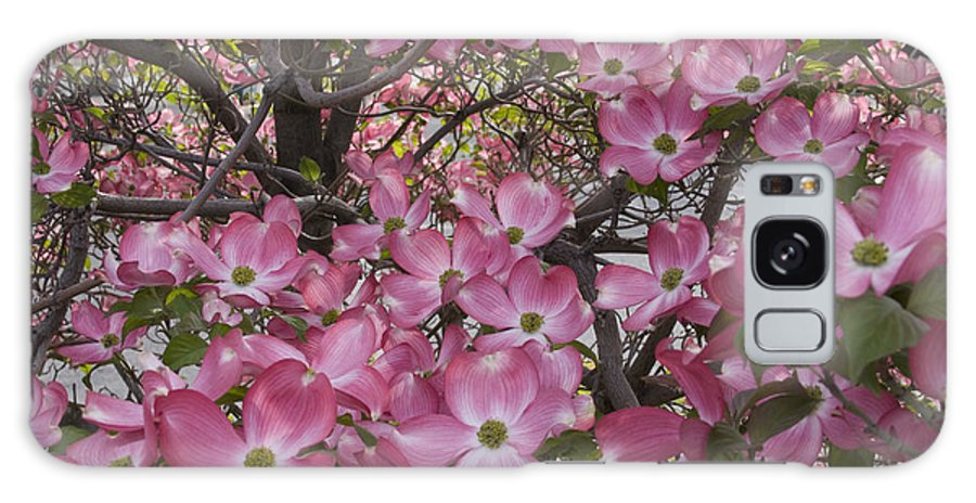 Dogwood Galaxy S8 Case featuring the photograph Full Bloom by Idaho Scenic Images Linda Lantzy