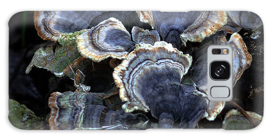 Nature Galaxy S8 Case featuring the photograph Fungi by Steve Marler