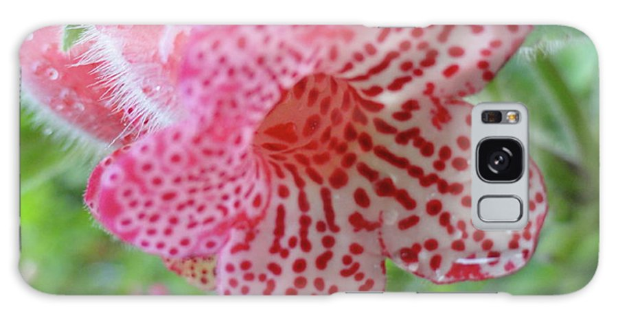 Flowers Galaxy S8 Case featuring the photograph Furry Flora by Trish Hale