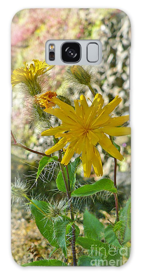 Flowers Galaxy Case featuring the photograph Fuzzy by Larry Keahey