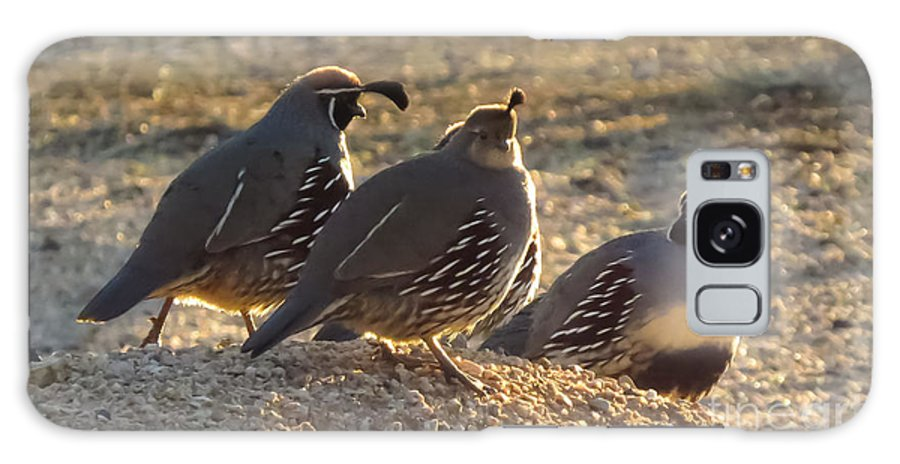 Gambel's Quail Galaxy Case featuring the photograph Gambel's Quail by Stephanie Forrer-Harbridge