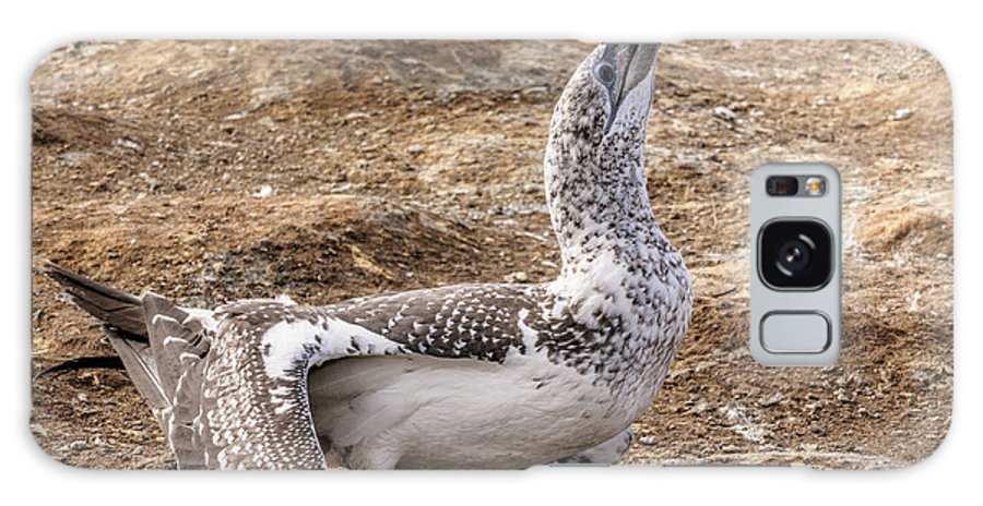 Gannet Galaxy S8 Case featuring the photograph Gannet Chick 1 by Werner Padarin
