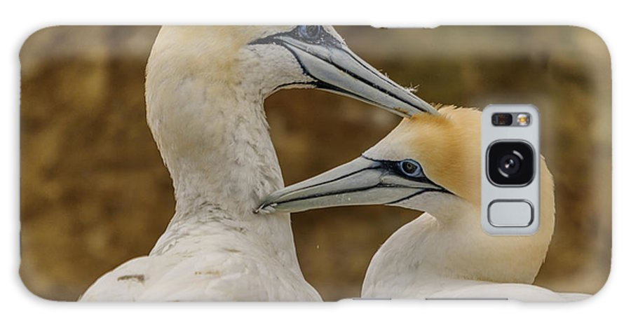 Gannet Galaxy S8 Case featuring the photograph Gannets 4 by Werner Padarin