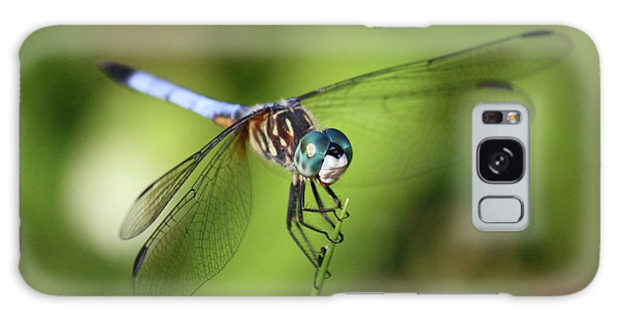 Dragonfly Galaxy S8 Case featuring the photograph Garden Dragonfly by Carol Groenen