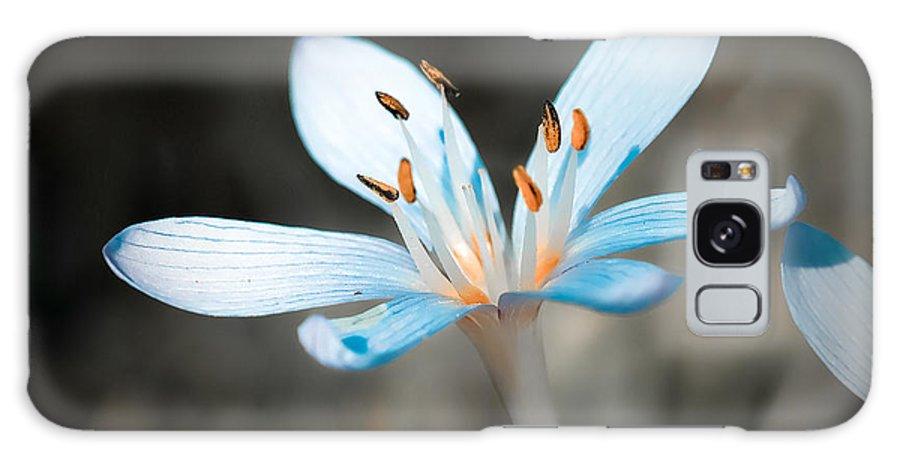 Flower Galaxy S8 Case featuring the photograph Gentle by Gabriela Insuratelu