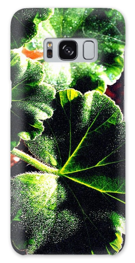 Geraniums Galaxy Case featuring the photograph Geranium Leaves by Nancy Mueller