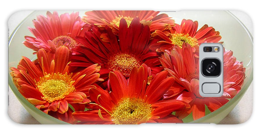 Nature Galaxy Case featuring the photograph Gerbera Daisies - A Bowl Full by Lucyna A M Green