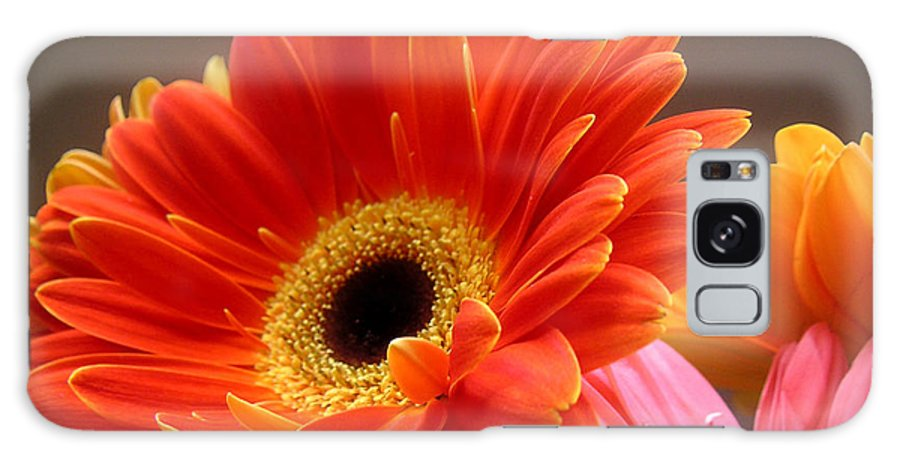 Nature Galaxy Case featuring the photograph Gerbera Daisies - Luminous by Lucyna A M Green