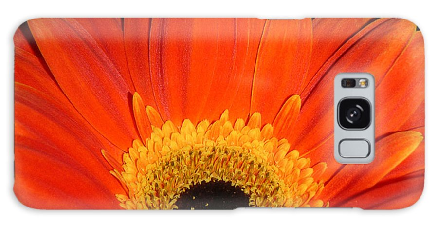 Nature Galaxy Case featuring the photograph Gerbera Daisy - Glowing In The Dark by Lucyna A M Green