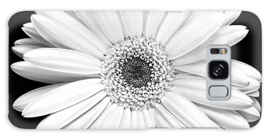 Gerber Galaxy Case featuring the photograph Single Gerbera Daisy by Marilyn Hunt