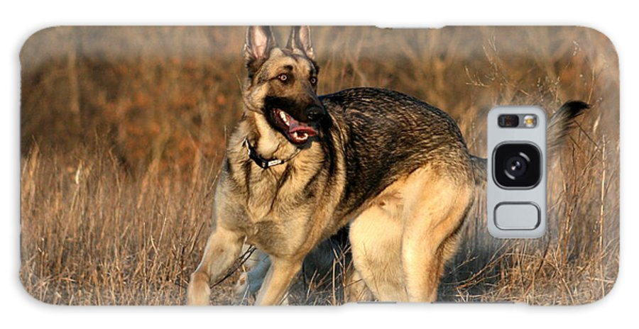 Animal Galaxy Case featuring the photograph German Shepherd 1 by David Dunham