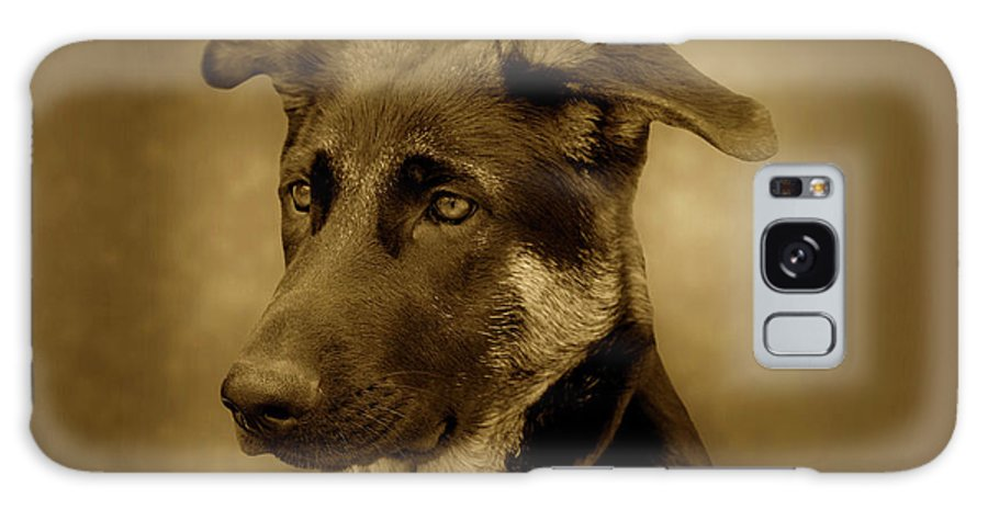 German Shepherd Dog Galaxy S8 Case featuring the photograph German Shepherd Pup by Sandy Keeton