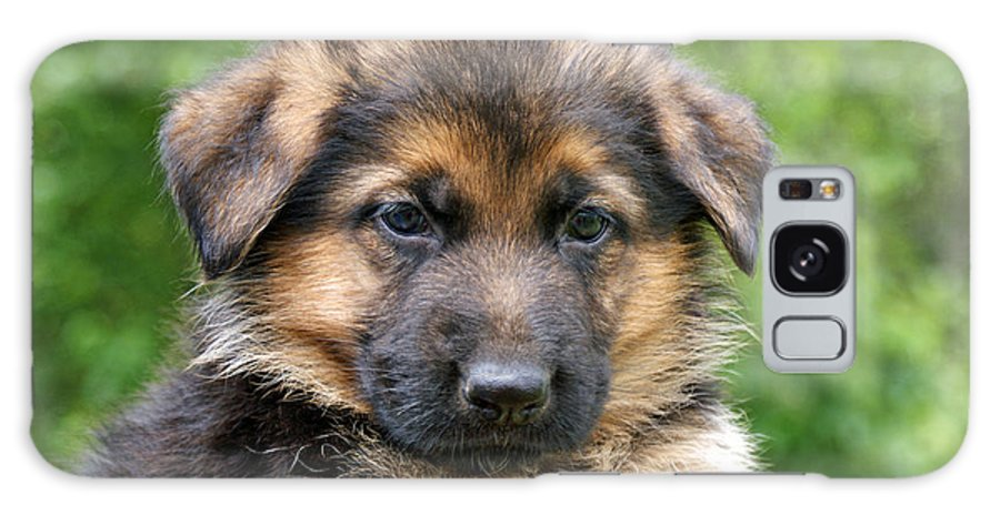 German Shepherd Galaxy S8 Case featuring the photograph German Shepherd Puppy by Sandy Keeton