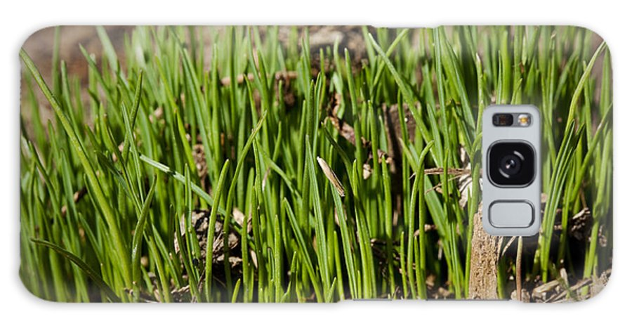 Grass Galaxy S8 Case featuring the photograph Germination by Kelley King