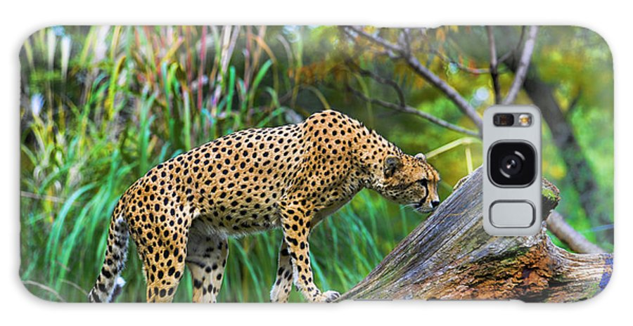 Cheetah Galaxy S8 Case featuring the photograph Getting The Scent by Keith Lovejoy