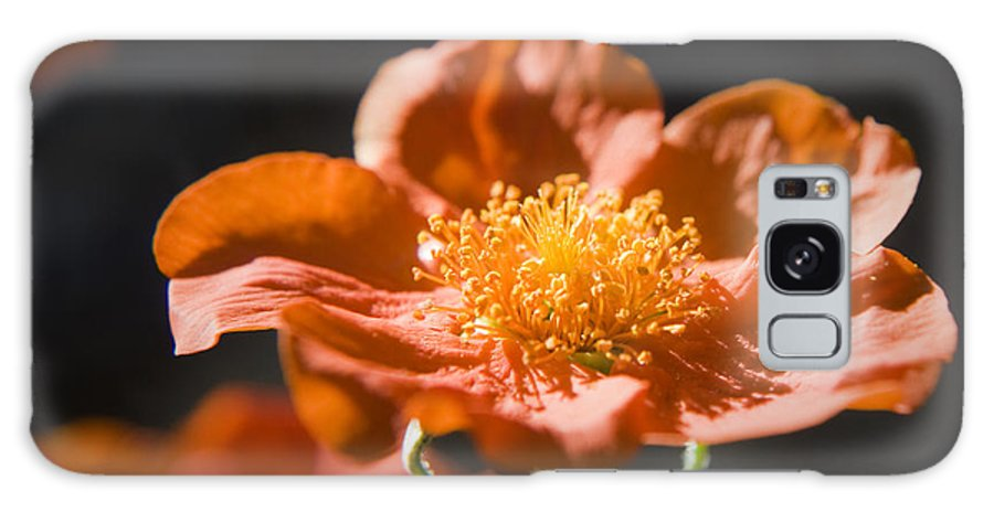 Geum Galaxy S8 Case featuring the photograph Geum Scarlet Avens by Teresa Mucha