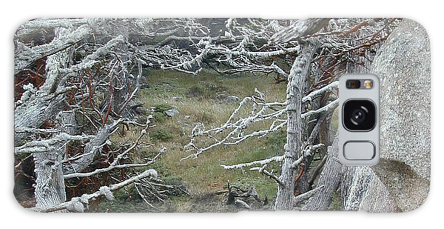 Lichens Galaxy S8 Case featuring the photograph Ghost Trees by Douglas Barnett