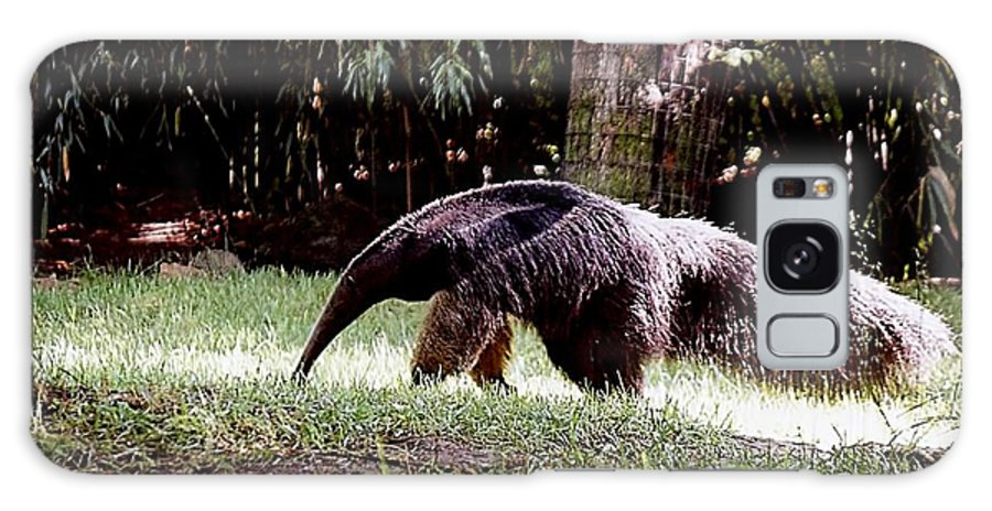 Animals Galaxy S8 Case featuring the photograph Giant Anteater by Jan Amiss Photography