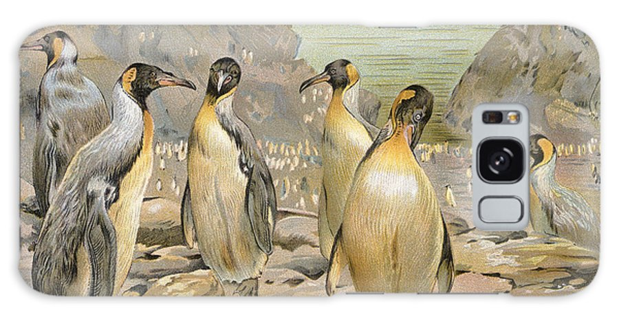 1900 Galaxy S8 Case featuring the photograph Giant Penguins, C1900 by Granger