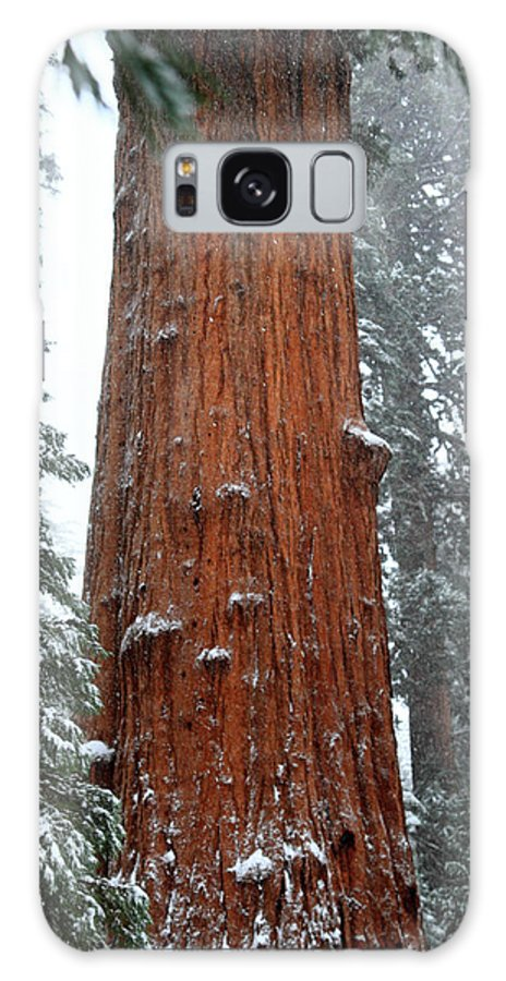 Sequoia Galaxy S8 Case featuring the photograph Giant Sequoia Tree by Pierre Leclerc Photography