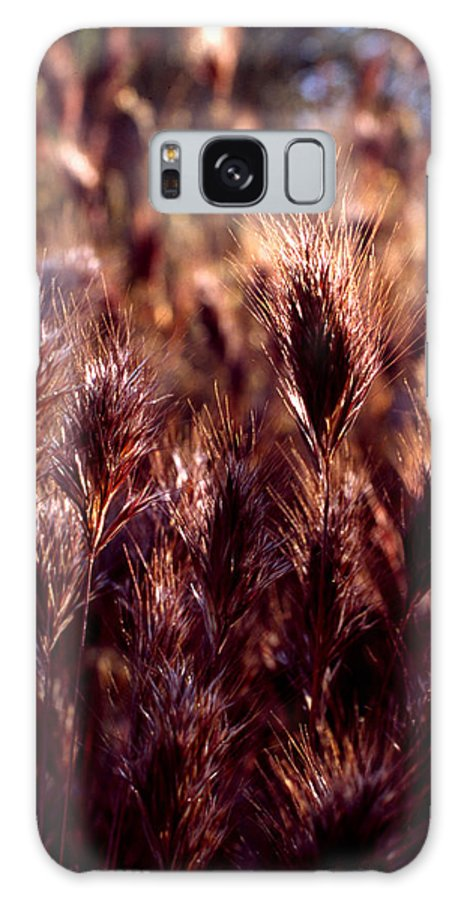 Nature Galaxy S8 Case featuring the photograph Gideon by Randy Oberg