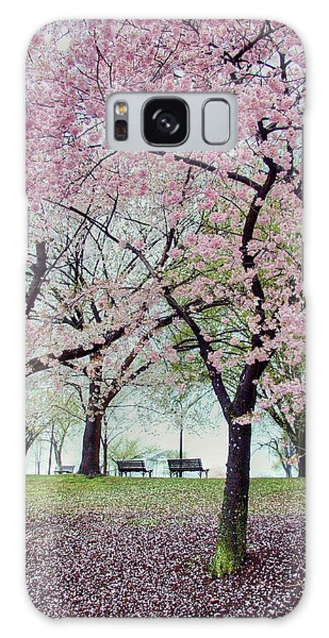 Cherry Blossoms Galaxy S8 Case featuring the photograph Gifts by Mitch Cat