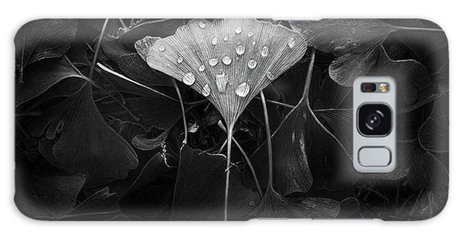 Leaf Galaxy Case featuring the photograph Ginkgo by Scott Norris