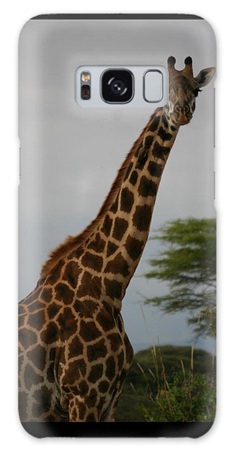 Giraffe Galaxy S8 Case featuring the photograph Giraffe by Christine Higgins