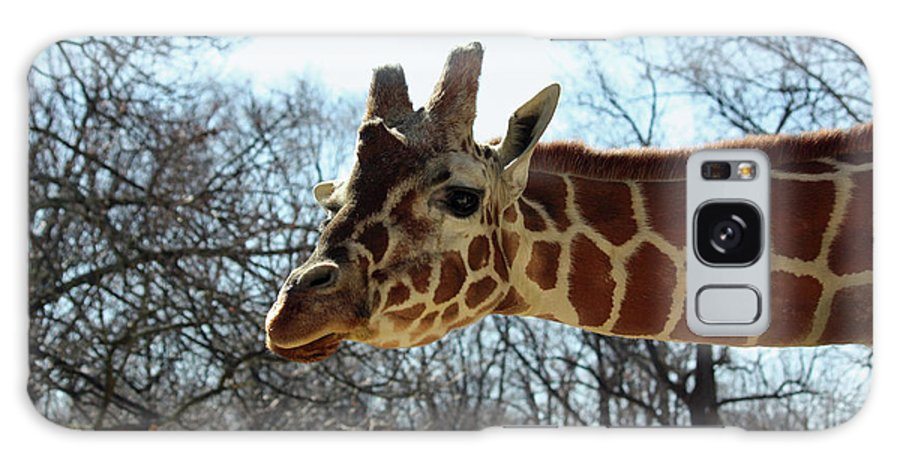 Maryland Galaxy S8 Case featuring the photograph Giraffe Stretching For A View by Ronald Reid