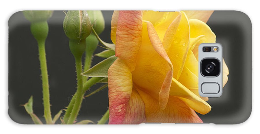 Flower Galaxy S8 Case featuring the photograph Glenn's Rose by Michael Peychich
