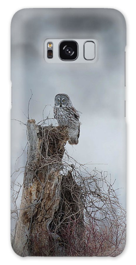 Owls Galaxy S8 Case featuring the photograph Gloomy Sunday by Heather King