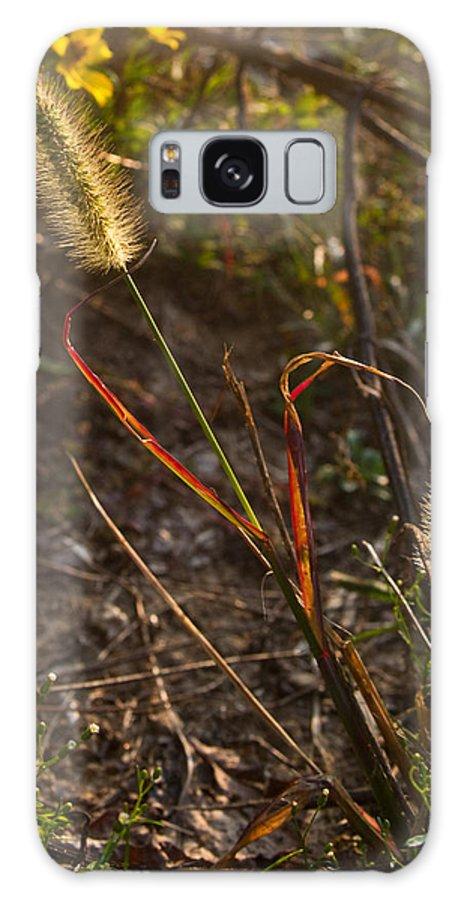Kentucky Galaxy S8 Case featuring the photograph Glowing Foxtails by Douglas Barnett